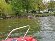 Das Feuerwehrboot nähert sich dem Rind. (Bild: feuerwehr-lauerz.ch)
