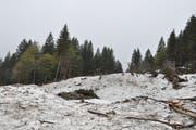Noch sind auf der Säntisalp die Schneemassen mit vielen Bäumen und Steinen zu sehen, die die Lawine mitgerissen haben. (Bild: Sabine Camedda)