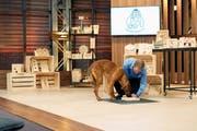 Das Anfreunden mit dem Hund von Investor Tobias Reichmuth nützte nicht: Martin Sailer erhielt kein Geld für Anteile an seiner Firma. (Bild: PD)
