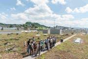 Das naturnah gestaltete Flachdach der Migros-Betriebszentrale Gossau bietet nicht nur Platz für fünf Bienenvölkern, hier nistet sogar noch der Kiebitz. (Bild: PD/Fabian Meyer)
