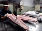 Um Frische vorzutäuschen, wird Thunfischfleisch oft verbotenerweise chemisch behandelt. (Symbolbild: EPA/EVERETT KENNEDY BROWN) (Bild: KEYSTONE/EPA/EVERETT KENNEDY BROWN)