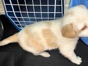Der junge Mischlingshund wurde neben einem Auto des Tierrettungsdienstes ausgesetzt. (Bild: Kapo ZH)