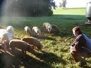 Hier dürfen die Schweine noch nach Herzenlust nach Würmen und Egerlingen wühlen. (Bild: PD)