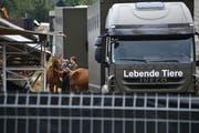 Räumung: Am 8.August 2017 werden auf dem Hof in Hefenhofen die Tiere abtransportiert. (Bild: Manuel Nagel)