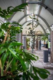 Blick in die Ausstellung über Kletterpflanzen in der Orangiere des Botanischen Gartens in St.Gallen. Die Schau ist jetzt bis 13. Oktober dort zu sehen. (Bild: Urs Bucher - 28. Mai 2019)