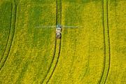 Ein Rapsfeld wird mit Pestiziden besprüht. Bild: Hans Blossey/Keystone