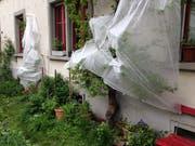Auch in Gärten der Stadt St.Gallen hat man Vorbereitungen auf die Rückkehr von Kälte und Schnee getroffen: Mit Flies geschützte Aprikosenbäume an der Metallstrasse in der Lachen. (Bild: Reto Voneschen - 4. Mai 2019)