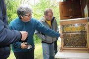 Johanna Seiterle und Christoph Füchslin, der Imker vom Lehrbienenstand, zeigen den Besuchern, wie das Zusammenleben im Bienenstaat funktioniert. (Bild: Trudi Krieg)