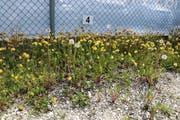 Blütenvielfalt am Parkplatzrand. (Bild: Stefan Herfort)