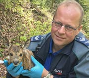 Eines der beiden geretteten Rehkitze. (Bild: Stadtpolizei St.Gallen - 7. Mai 2019)