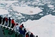 Besonders gefragt: Bären auf Eisschollen. Touristen fotografierten gestern Eisbären bei Spitzbergen. (Bild: Bryan and Cherry Alexander/Keystone)