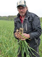 Bio-Gemüsebauer Peter Aschmann. (Bild: Silvia Schaub)