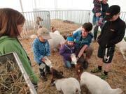 Luca und Lynn schöppeln zusammen mit Leiterin Ursi Zimmermann die Ziegen. (Bild: Ruedi Wechsler, Buochs, 1. Juni 2019)
