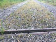 Sehr problematisch: Über den Kiesweg, der mit Herbizid behandelt wurde, führt ein direkter Wasserabfluss. (Bild: PD)