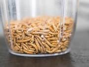In den Niederlanden wurde in der Anwesenheit des Königs eine grosse Insektenfabrik eröffnet: ein Becher mit Mehlwürmern (Archivbild). (Bild: KEYSTONE/PETER KLAUNZER)