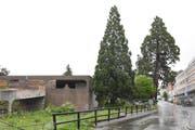 Blick auf die alte Migros und die zwei Mammutbäume von der Oberdorfstrasse her.