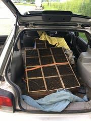 Zwölf Bienenvölker im Kofferraum geschmuggelt. (Bild: PD)