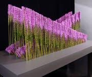 Die Abschlussarbeit «Hinfallen und wieder Aufstehen», dargestellt mit 450 Liatris-Blumen. (Bild: PD)