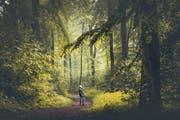 «Baden» im Wald. Wer keinen in der Nähe hat, kann sich auch auf offenem Feld oder in einem städtischen Park Gutes tun. (Bild: Getty)