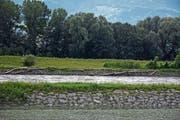 Im Vergleich zu 2016 liegt wenig Schwemmholz im Rheinvorland und auf dem Dämmen. (Bild: Kurt Latzer)