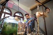 Pablo Walser räumt im Zeughaus Teufen sein Aquarium aus – seine «Wunderkammer» mit lebendem Krebs. (Bild: Adriana Ortiz Cardozo)