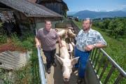 Der Schweinestall von Kaspar Hofer (rechts) mit dem vorgelagerten Freilauf für die Schweine. Neben Hofer steht sein Sohn Balthasar, der in Zukunft den Hof führen will. (Bild: Pius Amrein, Meggen, 17. Juni 2019)