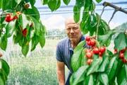 Bauer Walter Stettler zeigt seine Kirschen-Plantage. (Bild: Colin Frei)