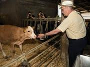 Bundesrat Guy Parmelin besucht einen Bauernhof und macht Bekanntschaft mit einem Kalb. (Bild: KEYSTONE/JEAN-CHRISTOPHE BOTT)