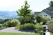 Die Bepflanzung des Gemeinschaftsgrabes auf dem Oberhelfenschwiler Friedhof bietet ausreichend Nahrung für zahllose Insekten. (Bild: Urs M. Hemm)