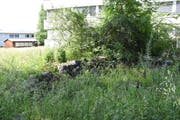 Hinter dem Wattwiler Gemeindehaus bietet ein Steinhaufen Lebensraum für Eidechsen. (Bild: Urs M. Hemm)