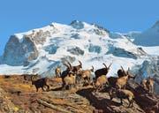 Die Dufourspitze ist der höchste Punkt der Schweiz. (Bild: Photo Klopfenstein)
