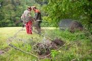 Weidezäune und Stacheldraht an Waldrändern werden Jahr für Jahr vielen Wildtieren zum Verhängnis. Bei Gossau wurden Ende Mai daher vom Zivilschutz nicht mehr benötigte Zäune abgerissen. (Bild: Ralph Ribi - 22. Mai 2019)