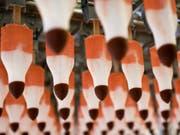 Blick in die Produktion der Rakete-Glacé in Rorschach. Auch 50 Jahre nach der Lancierung ist sie immer noch die Meistverkaufte. (Bild: KEYSTONE/ENNIO LEANZA)