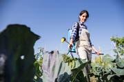 Auch als Hobbygärtner kommt man in der Schweiz zu sehr potenten Pestiziden.Symbolbild: Getty