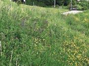Ein kleiner Hang im Wiler Weinbergquartier: Was für den Laien wie ein Wildwuchs aussieht, ist in Tat und Wahrheit eine gezielt angelegte Vegetation für Pflanzen und Kleintiere. (Bild: PD)