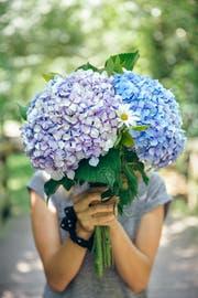 Pralle Blumenkugeln, ein Inbegriff des Sommers. (Bild: Getty)