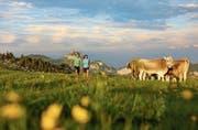Derzeit kann man über Blumenwiesen wandern und hat dabei den Alpstein im Blick. (Bild: Swiss-Image)