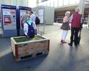 Das Beet am Hauptbahnhof dient auch Wartenden. (Bild: Marlen Hämmerli)