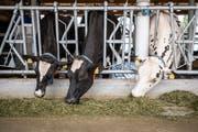 Eigenmanns Kühe haben dieses Jahr genug Heu zu fressen.
