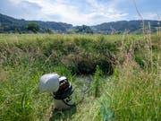 Unter anderem am Äächelibach in Au haben die Fachleute regelmässig Wasserproben entnommen und analysiert. (Bild: Mike Hauser)