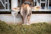 2019 ist wohl genug Heu für Eigenmanns Milchkühe und Kälber vorhanden.