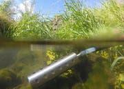 Mit diesem Gerät nehmen Fachleute des Kantons Wasserproben. Hier im Äächeli in der Rheintaler Gemeinde Au. (Bild: PD)