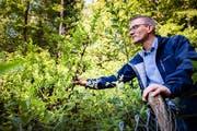 Simon Zeller, Projektleiter der Biodiversitätsstrategie im Kanton St.Gallen, mit der Niedrigen Birke. (Bild: Urs Bucher)