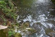 In diesem Bach zwischen Wuppenau und Zuzwil sind die Bachforellen der Schweinegülle erlegen. (Bild: Kantonspolizei Thurgau)