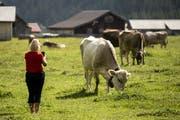 Kühe grasen auf dem Urnerboden. (Bild: Keystone/Alexandra Wey, 10. Juli 2019)