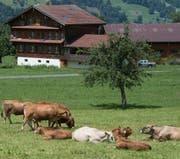 Der kantonale Richtplan legt auch die Grösse der Ställe fest. (Symbolbild: Boris Bürgisser, Flüeli-Ranft)