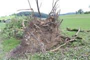 Unglaubliche Energie: Die Eigenrotation von Tornados kann selbst grosse Bäume samt Wurzelwerk aus dem Boden heben oder ganze Baumkronen wegreissen.