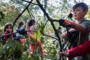 Stadtsanktgaller Kinder sollen mehr über Biodiversität lernen. (Bild: PD)