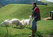 Tobias Obwegeser kontrolliert, ob die Ziegen korrekt markiert sind und einen Schattenplatz haben. (Bilder: Karin Erni)