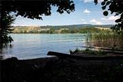 In der Nähe der Gemeindegrenze zwischen Mosen und Beinwil am See hat der Fischer den Kaiman beobachtet. Bild: Stefania Telesca (Bild: Stefania Telesca)